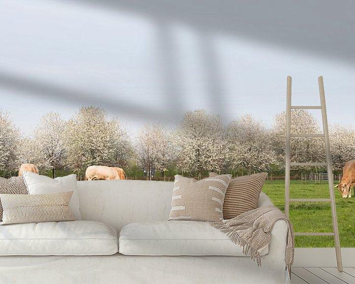 Beispiel fototapete: blonde d'aquitaine kühe in frühlingslandschaft mit blühenden bäumen in der nähe von utrecht in den n von anton havelaar