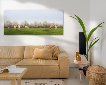 blonde d'aquitaine cows in spring landscape with blossoming trees near utrecht in the netherlands