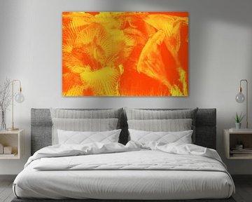 Freesien in Eis Orange von Marc Heiligenstein