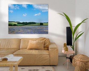 Belgische Landschaft mit Maisblumen unter Liege in den belgischen Ardennen in der Nähe von la roche  von anton havelaar