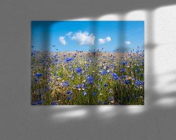 Maisblüten im sommerlichen Weizenfeld unter blauem Himmel mit flauschigen Wolken von anton havelaar