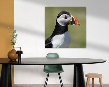 Wildlife: Portret van Papegaaiduiker, Fair Isle, UK van Koolspix