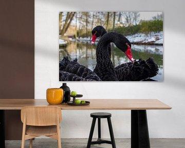 Zwarte zwanen van Wim Roebroek