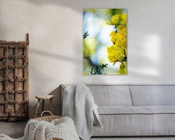 Gele bloemen in close up van Dieuwertje Van der Stoep