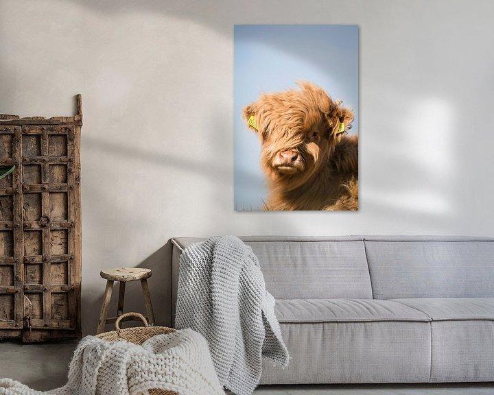 Sfeerimpressie: Schotse Hooglander kijkt recht in de camera van Mascha Looije
