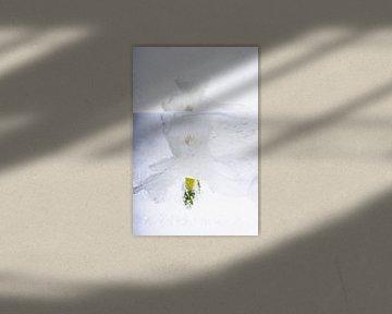 Weiße Narzissen in Eis 2 von Marc Heiligenstein