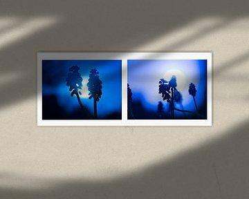 Collage van blauwe druifjes van Annie Jakobs