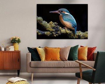 IJsvogel van Elles Rijsdijk
