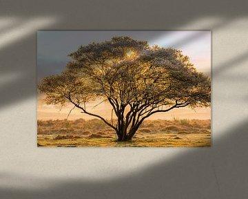 Krentenboom op de hei