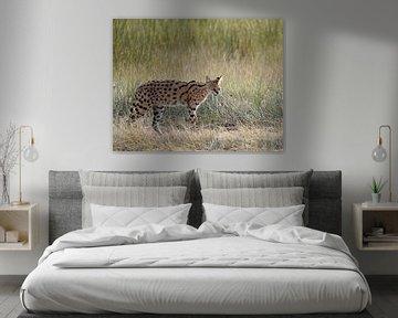 Serval von Koolspix
