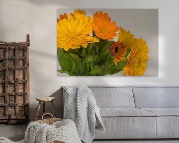Goudgele en oranje goudsbloem bloeiend in april van JM de Jong-Jansen