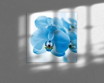 blauwe orchidee van Mariska Hofman