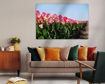 Rosa Tulpen auf dem Feld - Teil 2 von Homemade Photos
