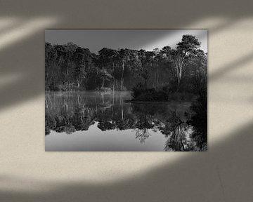 Herbst in Oisterwijk schwarz-weiß von Ronne Vinkx