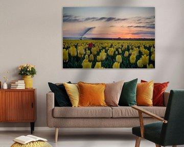 Tulpen von Johan Mooibroek