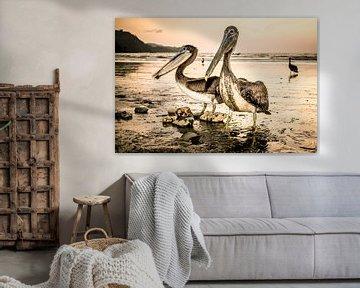 Pelikanen bij zonsondergang. van Ron van Gool