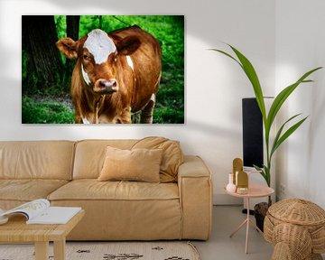 Eine Kuh von RK