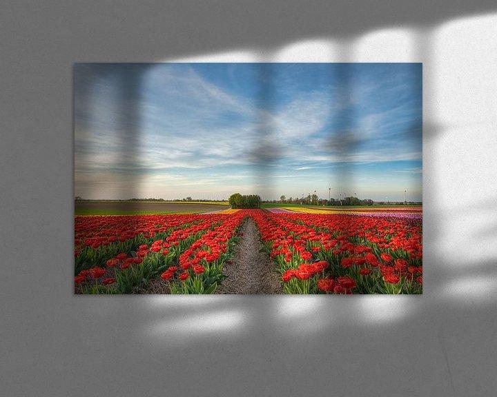 Sfeerimpressie: Tulpenveld in het Rijndistrict Neuss van Michael Valjak