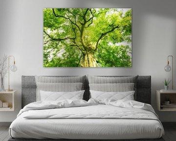 Gigantische boomkroon van Oliver Henze