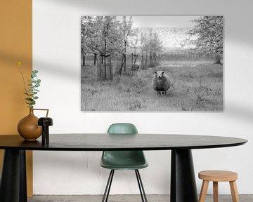 Schafe zwischen den Obstbäumen von Tania Perneel