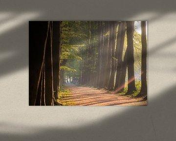 zonnige bomenlaan van Tania Perneel