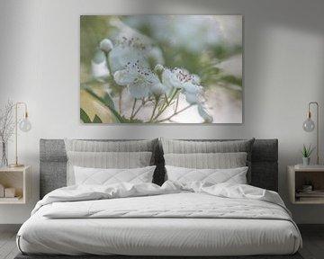 weiche Blüte von Tania Perneel