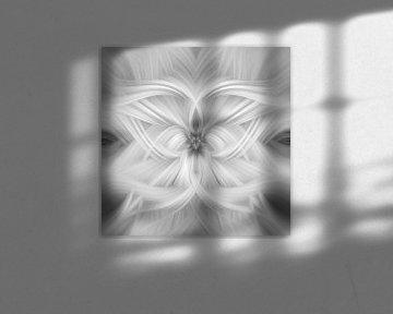 Abstrakte Photoshop-Erstellung von Henk Meijer Photography