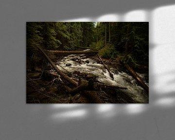 Canada's water van Luc Sijbers