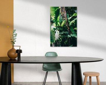 Grüner Dschungel von Patrycja Polechonska