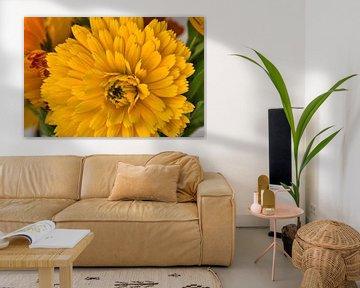 Makrofotografie einer blühenden gelben Ringelblume von J..M de Jong-Jansen