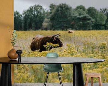 Schotse hooglander in Huis ter Heide van Jessica Arends