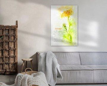 Ringelblume von Theodor Decker