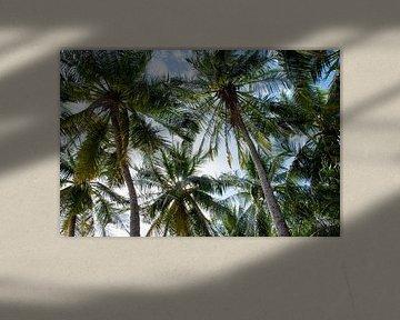 Atmosphärisches Foto von Palmen in Farbe von Bianca ter Riet