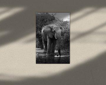 Elefant an der Uferpromenade von Jarno Dorst