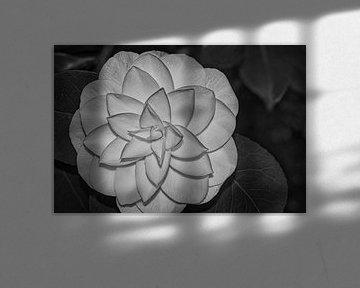Abstraktes Schwarz-Weiß von J..M de Jong-Jansen