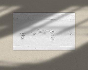 Strandläufer von Maarten Heijkoop