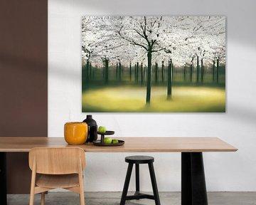 Springlight van Lars van de Goor