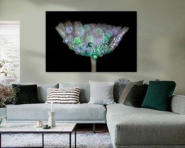 Gekleurde waterdruppels op een pluis