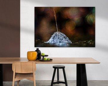 Fusseln mit Wassertröpfchen von Bert Nijholt