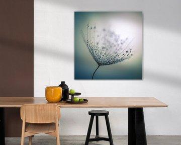 Waterdruppels op een pluis van Bert Nijholt