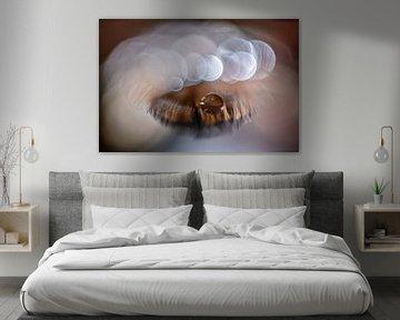 Waterdruppel op een veertje van Bert Nijholt