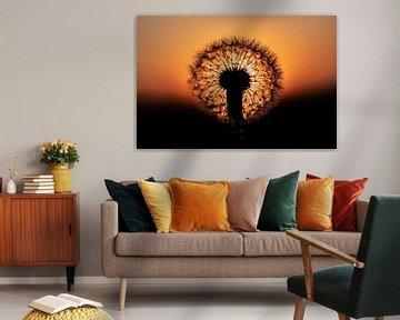 Paardenbloem met de zonsondergang van Bert Nijholt