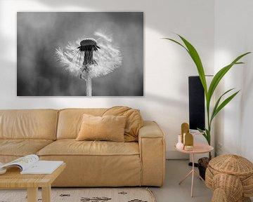 Paaardenbloem pluis in zwart/wit