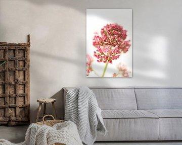 Wunderschöne rosa Blume von Miranda van Hulst
