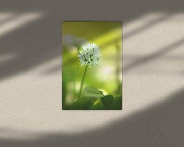 Grün weiß zarte Farben des Frühling