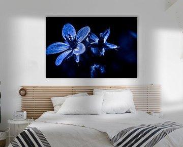 Reiherschnabel schwarz-weiß mit Farbe von Frank Ketelaar
