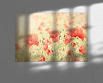 Poppies II van Christa van Gend