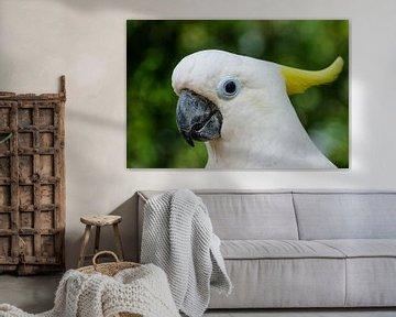 Der weiße Kakadu #1 von pixxelmixx