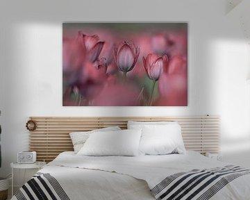Tulpen-Romanze von Coby Bergsma