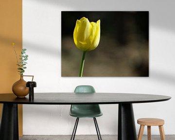 Frühlingsblumen-Sammlung von Marinescu Dan